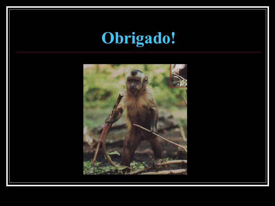 Referências utilizadas ANDERSON, R.2004. Animal diversity web: Cebus apella.