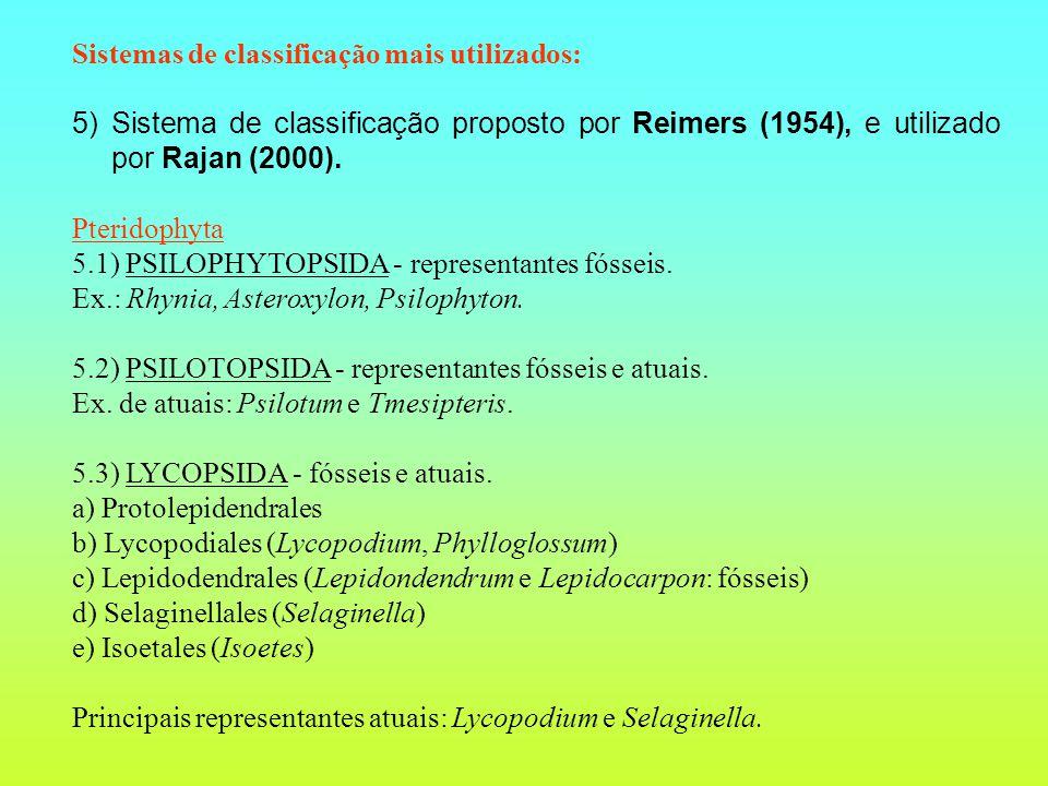 Sistemas de classificação mais utilizados: 5) Sistema de classificação proposto por Reimers (1954), e utilizado por Rajan (2000). Pteridophyta 5.1) PS