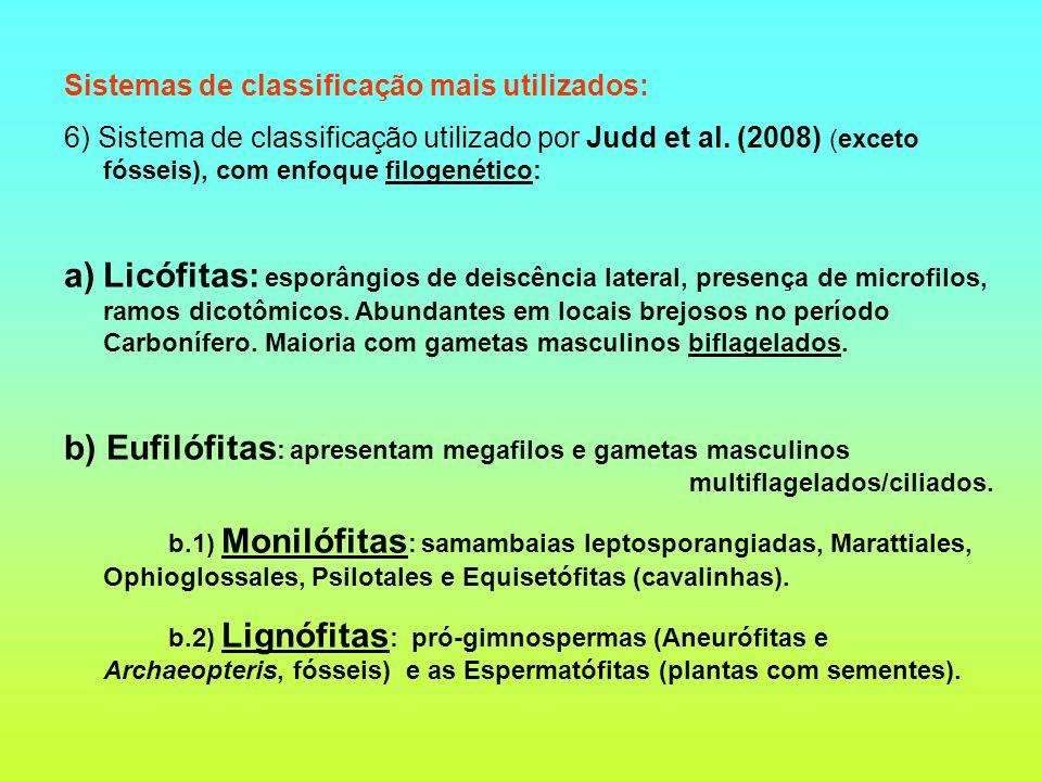 Sistemas de classificação mais utilizados: 6) Sistema de classificação utilizado por Judd et al. (2008) (exceto fósseis), com enfoque filogenético: a)