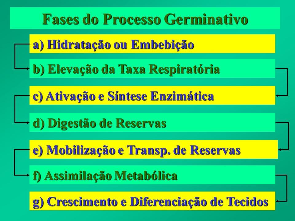 Fases do Processo Germinativo a) Hidratação ou Embebição b) Elevação da Taxa Respiratória c) Ativação e Síntese Enzimática d) Digestão de Reservas e)