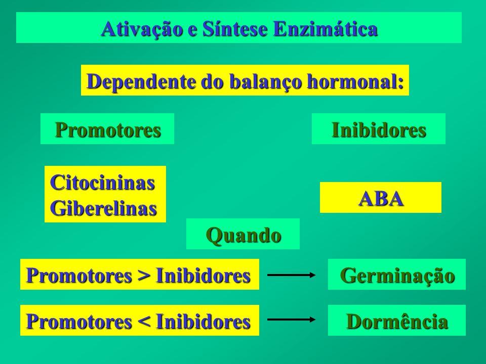 Ativação e Síntese Enzimática Dependente do balanço hormonal: PromotoresInibidores CitocininasGiberelinas ABA Quando Promotores > Inibidores Germinaçã