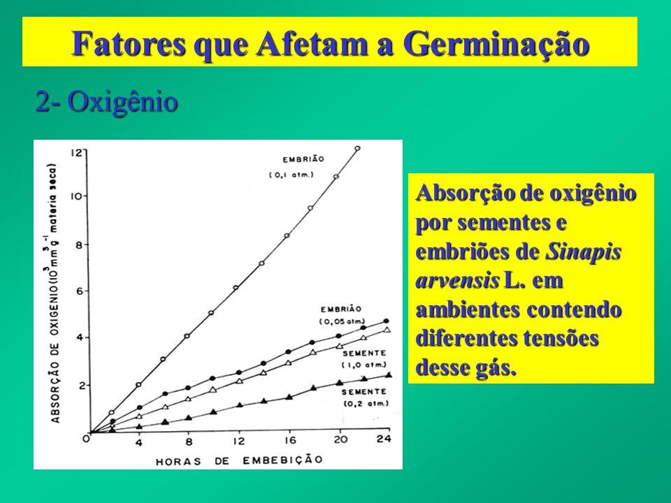 Fatores que Afetam a Germinação 2- Oxigênio Absorção de oxigênio por sementes e embriões de Sinapis arvensis L. em ambientes contendo diferentes tensõ