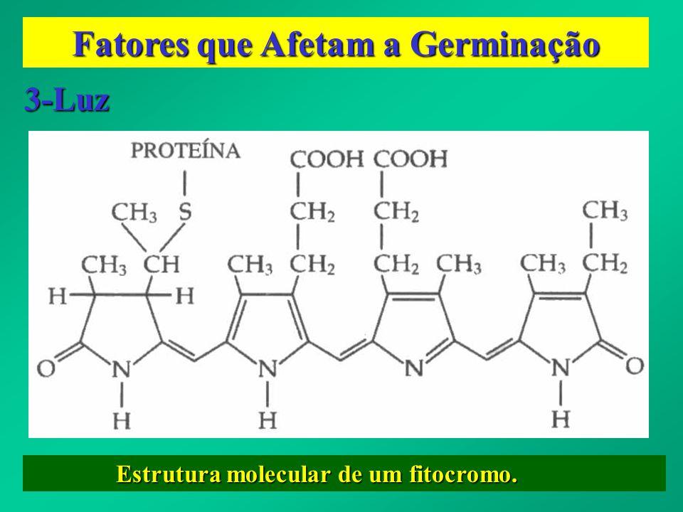 Fatores que Afetam a Germinação 3-Luz Estrutura molecular de um fitocromo. Estrutura molecular de um fitocromo.