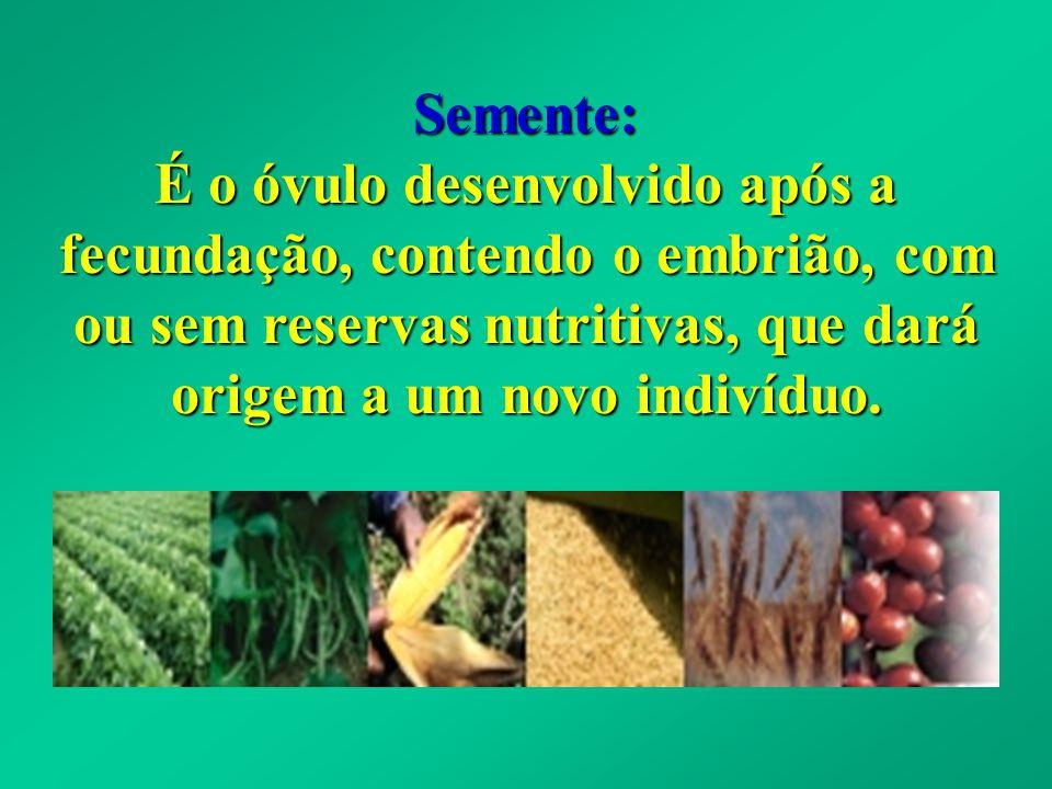 Elementos Básicos da Estrutura da Semente. Semente de Milho (Monocotiledônea)