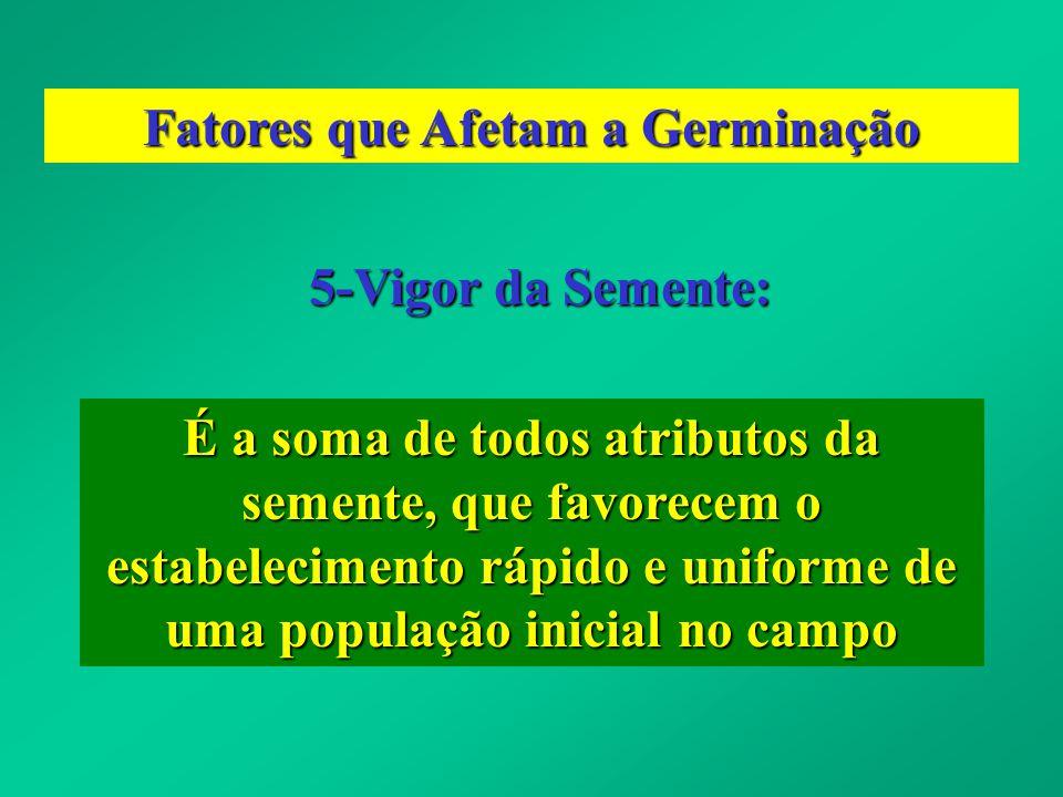 5-Vigor da Semente: É a soma de todos atributos da semente, que favorecem o estabelecimento rápido e uniforme de uma população inicial no campo