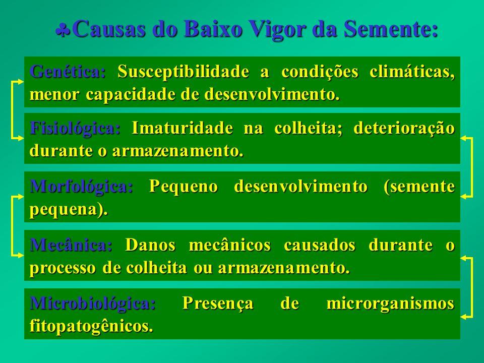 Causas do Baixo Vigor da Semente: Causas do Baixo Vigor da Semente: Genética: Susceptibilidade a condições climáticas, menor capacidade de desenvolvim