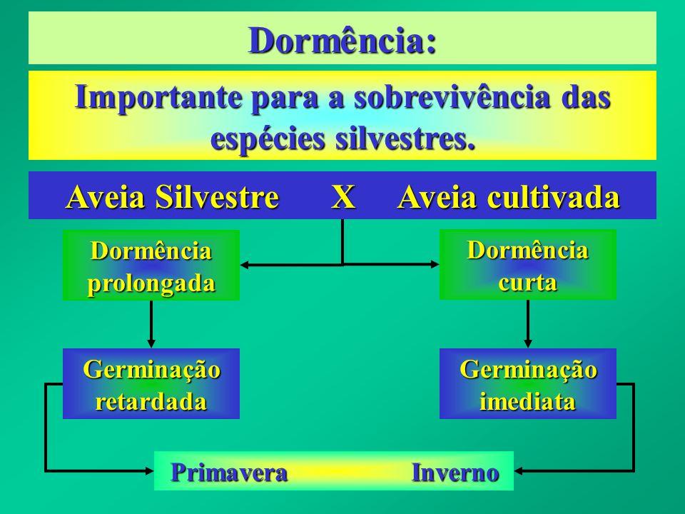 Dormência: Importante para a sobrevivência das espécies silvestres. Aveia Silvestre X Aveia cultivada Dormência prolongada Dormência curta Germinação