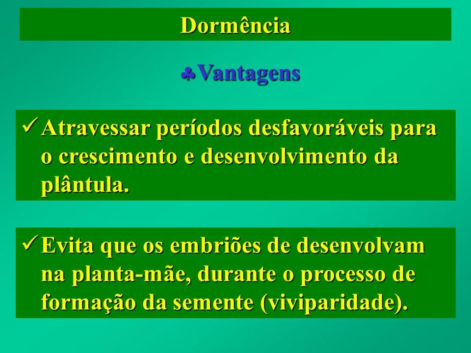 Dormência Vantagens Vantagens Atravessar períodos desfavoráveis para o crescimento e desenvolvimento da plântula. Atravessar períodos desfavoráveis pa