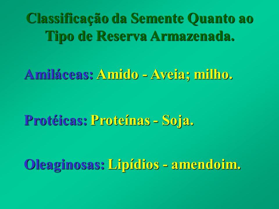 Classificação da Semente Quanto ao Tipo de Reserva Armazenada. Amiláceas: Amido - Aveia; milho. Protéicas: Proteínas - Soja. Oleaginosas: Lipídios - a