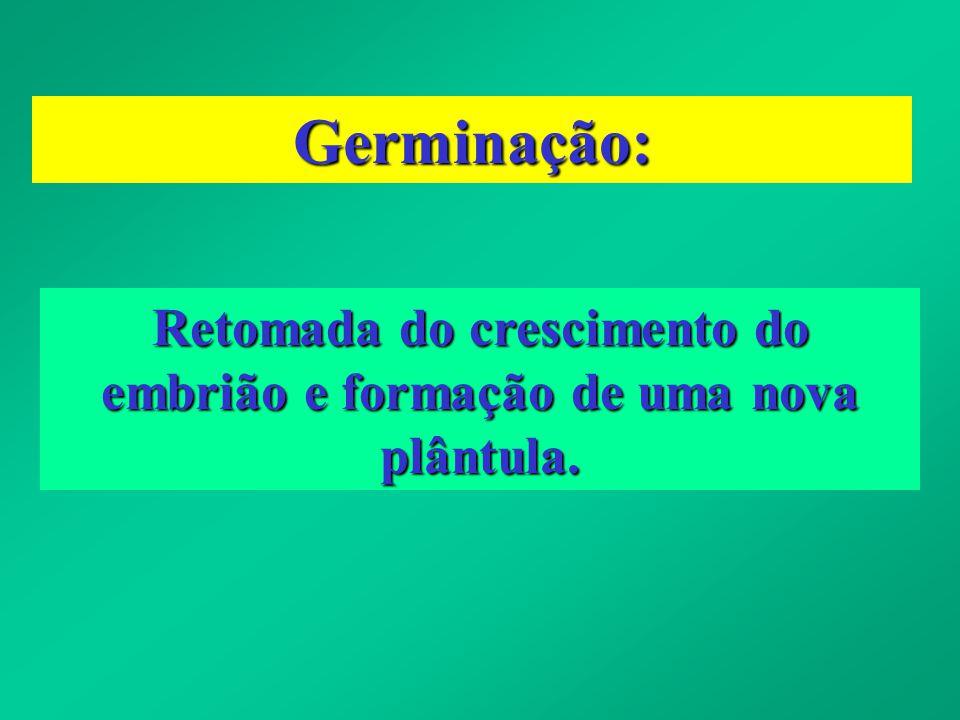 Germinação: Retomada do crescimento do embrião e formação de uma nova plântula.