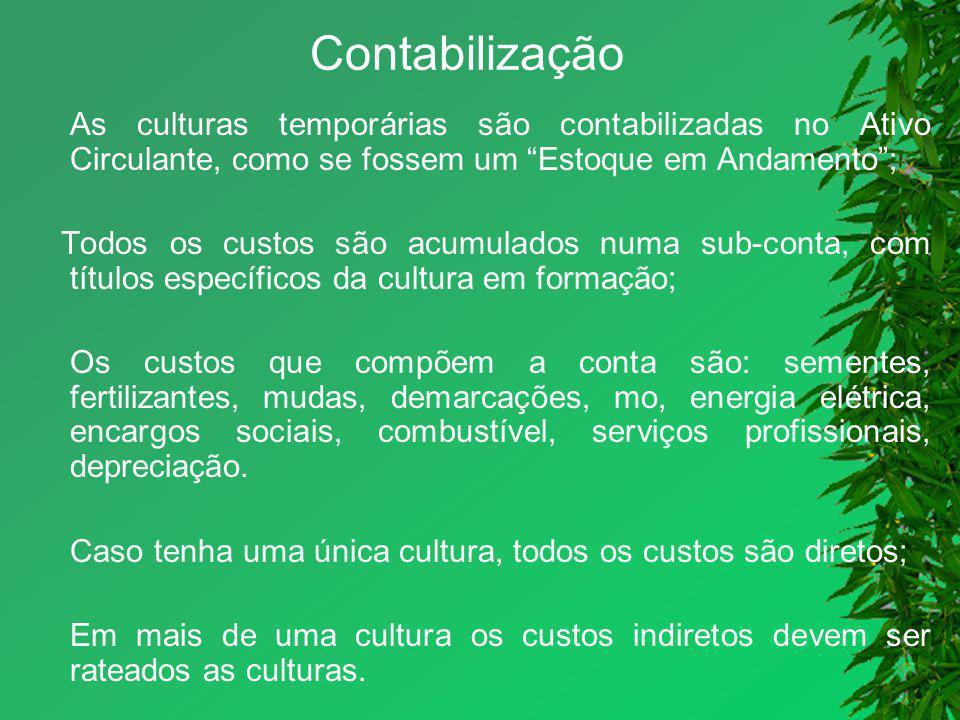 Contabilização As culturas temporárias são contabilizadas no Ativo Circulante, como se fossem um Estoque em Andamento; Todos os custos são acumulados