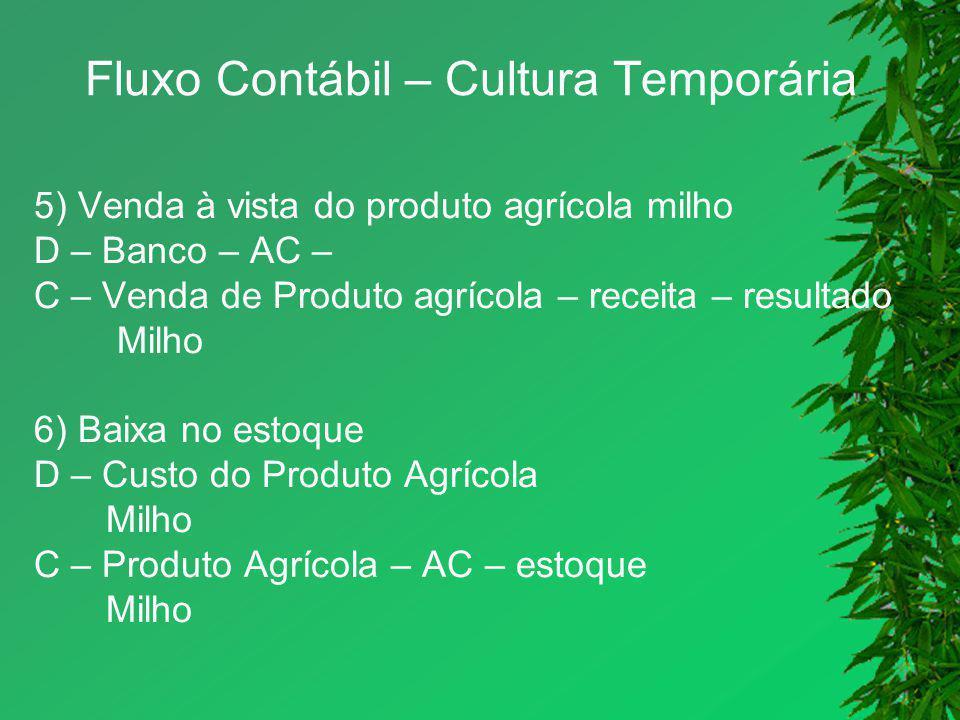 Fluxo Contábil – Cultura Temporária 5) Venda à vista do produto agrícola milho D – Banco – AC – C – Venda de Produto agrícola – receita – resultado Mi