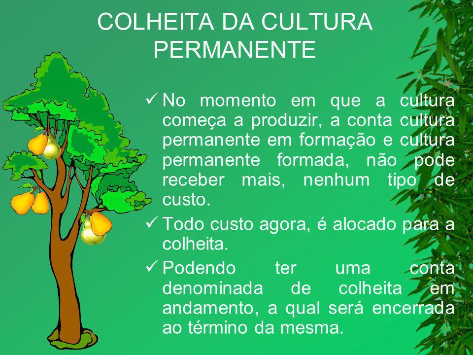 COLHEITA DA CULTURA PERMANENTE No momento em que a cultura começa a produzir, a conta cultura permanente em formação e cultura permanente formada, não