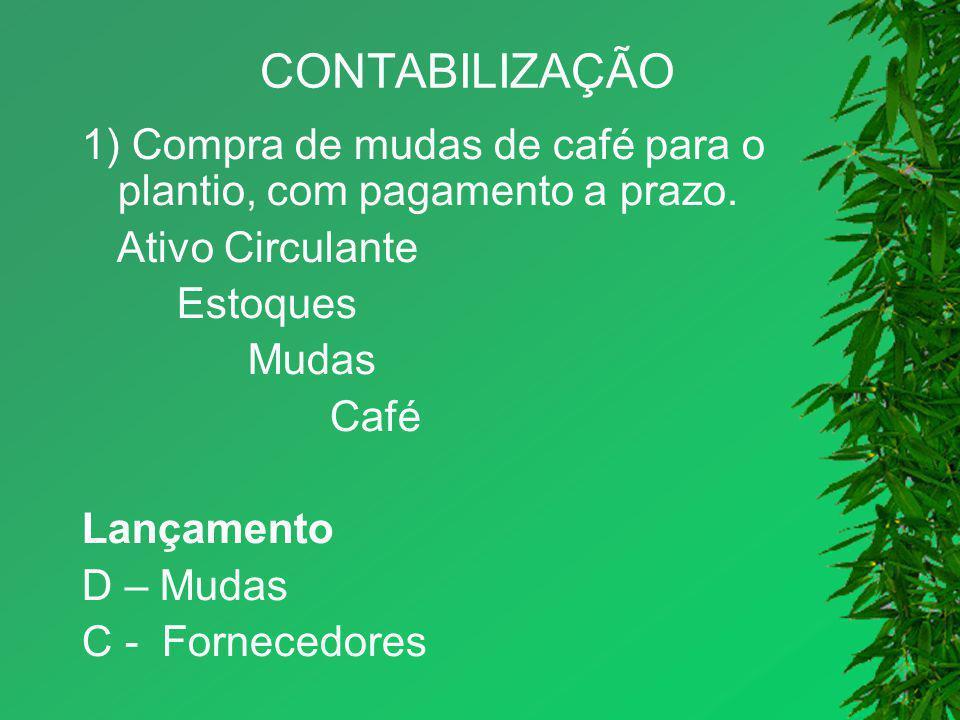 CONTABILIZAÇÃO 1) Compra de mudas de café para o plantio, com pagamento a prazo. Ativo Circulante Estoques Mudas Café Lançamento D – Mudas C - Fornece