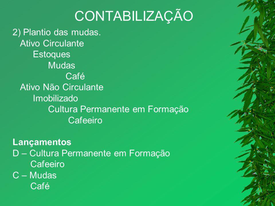 CONTABILIZAÇÃO 2) Plantio das mudas. Ativo Circulante Estoques Mudas Café Ativo Não Circulante Imobilizado Cultura Permanente em Formação Cafeeiro Lan