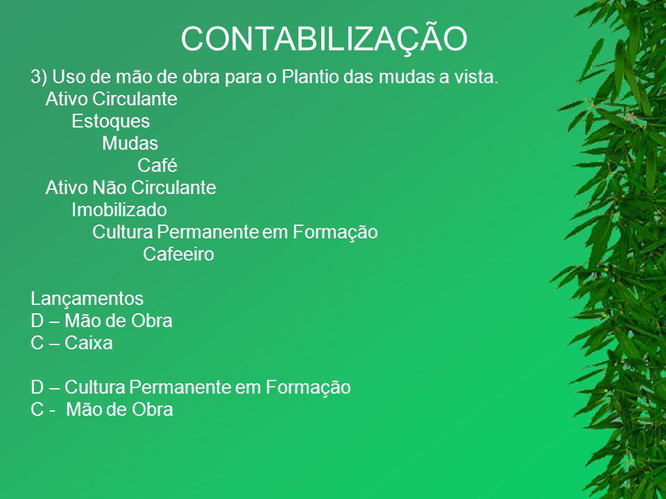 CONTABILIZAÇÃO 3) Uso de mão de obra para o Plantio das mudas a vista. Ativo Circulante Estoques Mudas Café Ativo Não Circulante Imobilizado Cultura P