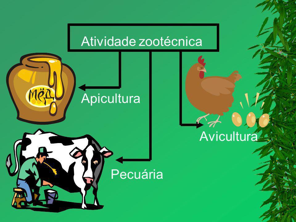 Atividade zootécnica Apicultura Avicultura Pecuária