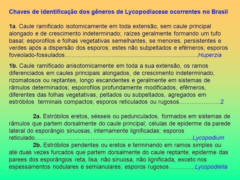 Chaves de identificação dos gêneros de Lycopodiaceae ocorrentes no Brasil 1a. Caule ramificado isotomicamente em toda extensão, sem caule principal al