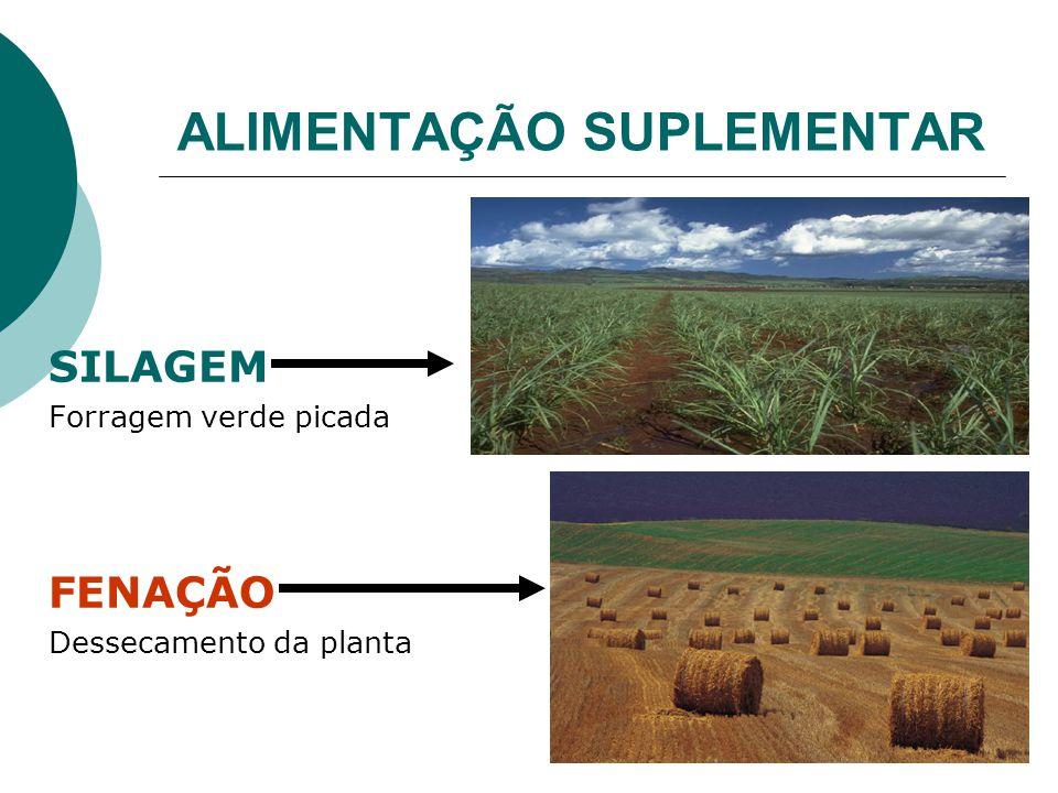 ALIMENTAÇÃO SUPLEMENTAR SILAGEM Forragem verde picada FENAÇÃO Dessecamento da planta
