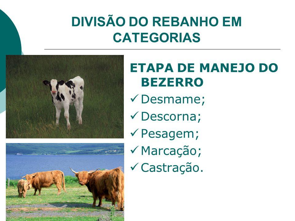 DIVISÃO DO REBANHO EM CATEGORIAS ETAPA DE MANEJO DO BEZERRO Desmame; Descorna; Pesagem; Marcação; Castração.
