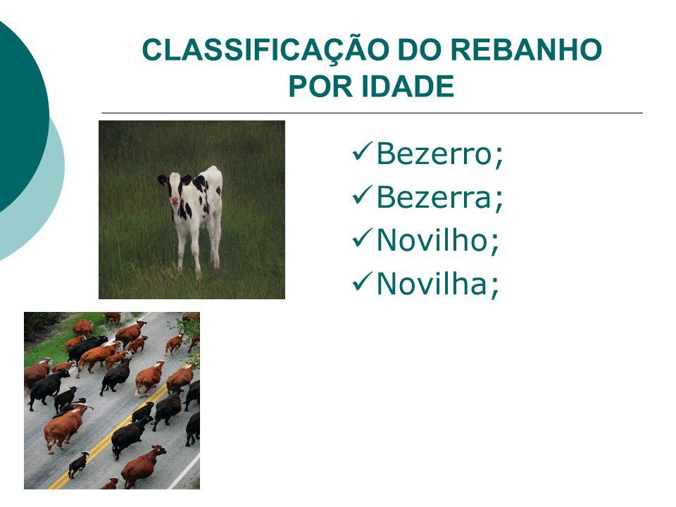 CLASSIFICAÇÃO DO REBANHO POR IDADE Bezerro; Bezerra; Novilho; Novilha;
