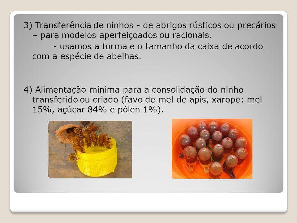 3) Transferência de ninhos - de abrigos rústicos ou precários – para modelos aperfeiçoados ou racionais.