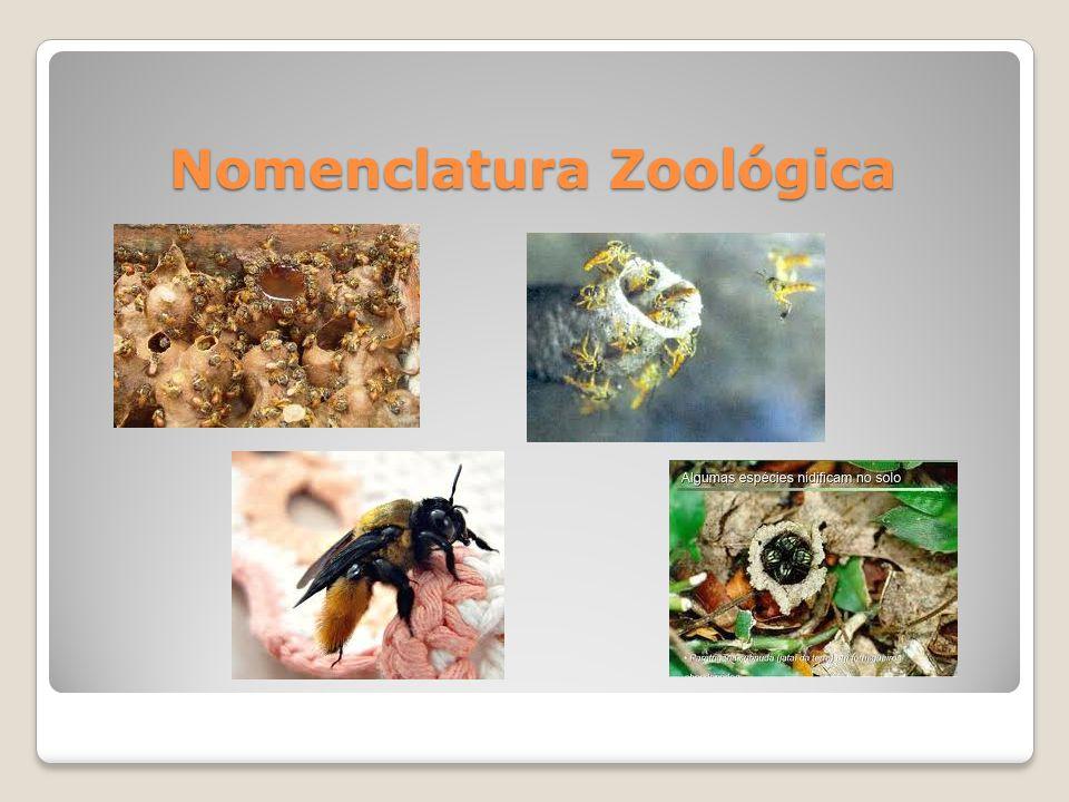 Classificação Taxonômica das Abelhas Mamangavas do gênero Xylocopa.