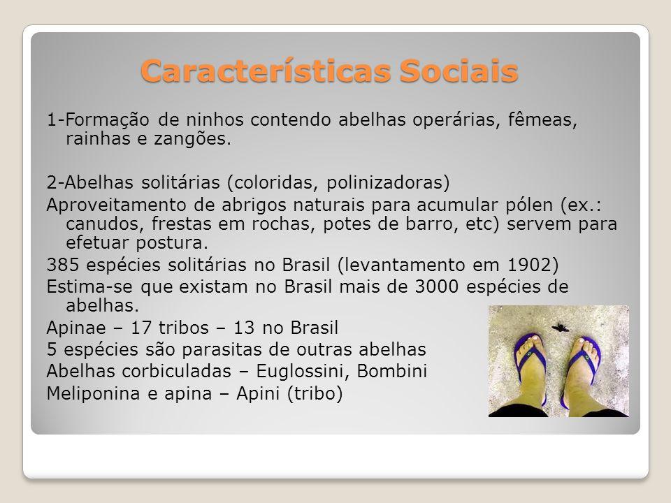 Características Sociais 1-Formação de ninhos contendo abelhas operárias, fêmeas, rainhas e zangões.