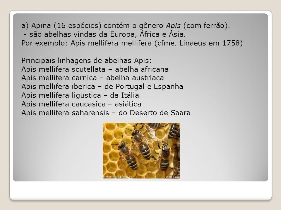 a) Apina (16 espécies) contém o gênero Apis (com ferrão).