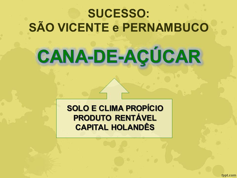 SUCESSO: SÃO VICENTE e PERNAMBUCO SOLO E CLIMA PROPÍCIO PRODUTO RENTÁVEL CAPITAL HOLANDÊS