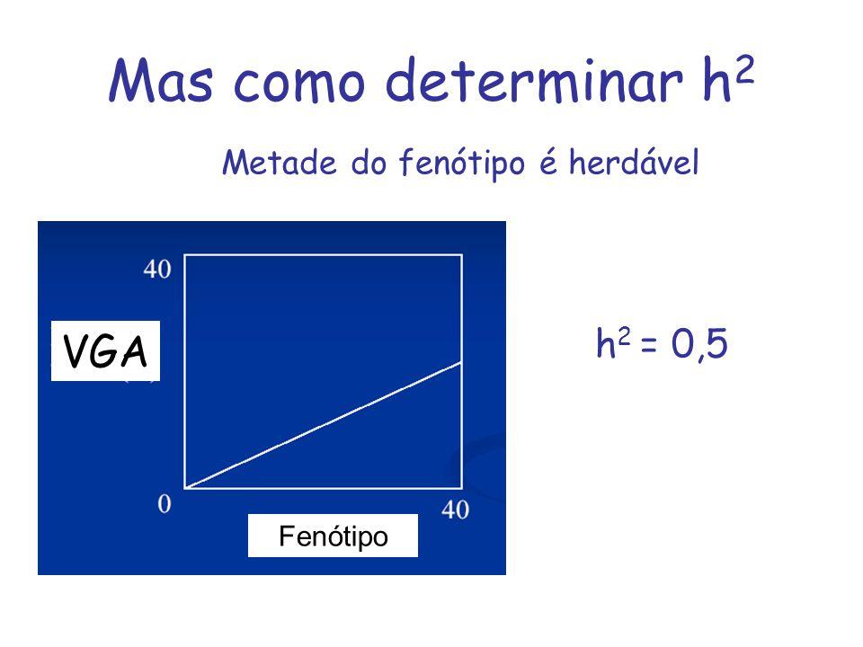 Mas como determinar h 2 VGA Fenótipo Metade do fenótipo é herdável h 2 = 0,5