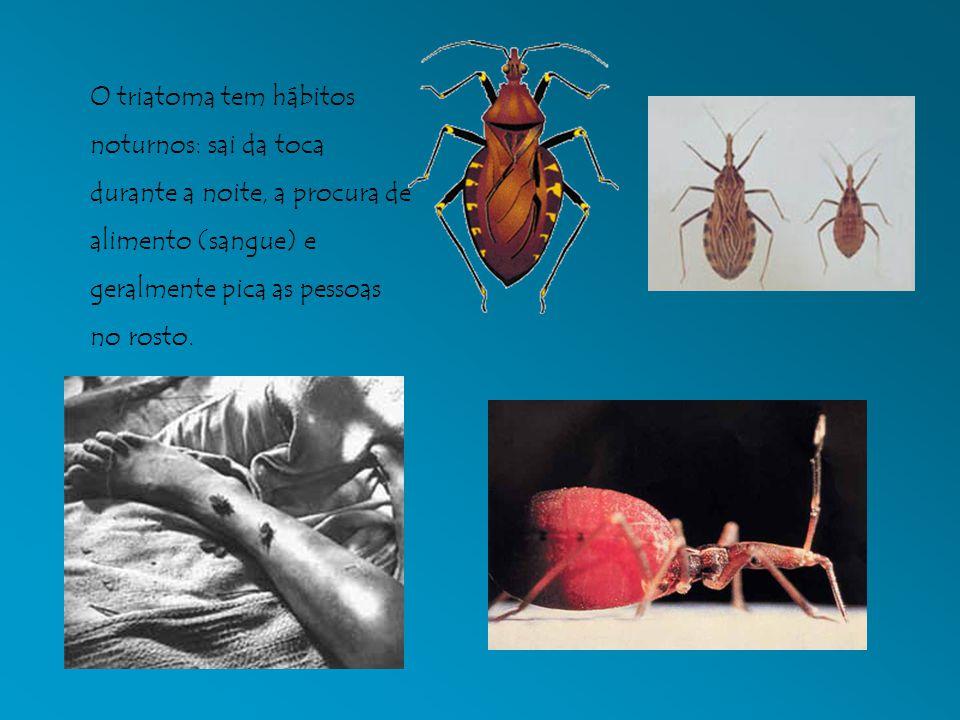 O triatoma tem hábitos noturnos: sai da toca durante a noite, a procura de alimento (sangue) e geralmente pica as pessoas no rosto.