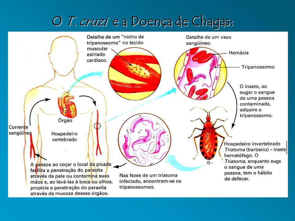 O T. cruzi e a Doença de Chagas: