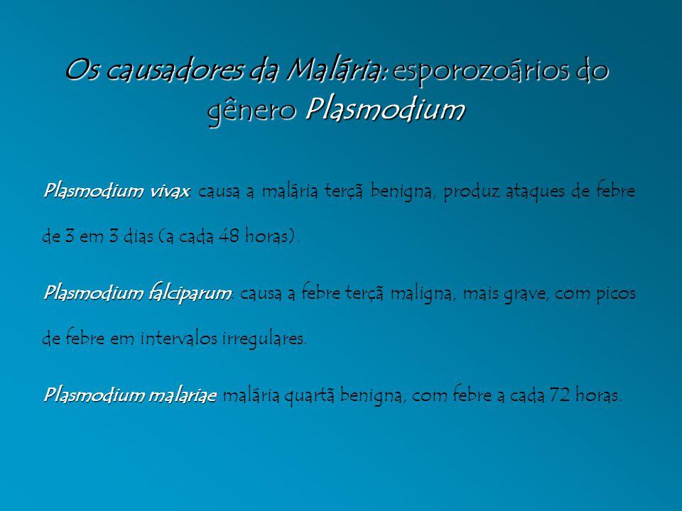 Os causadores da Malária: esporozoários do gênero Plasmodium Plasmodium vivax Plasmodium vivax: causa a malária terçã benigna, produz ataques de febre de 3 em 3 dias (a cada 48 horas).