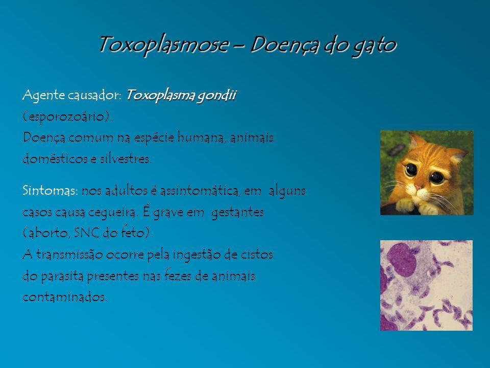 Toxoplasmose – Doença do gato Toxoplasma gondii Agente causador: Toxoplasma gondii (esporozoário). Doença comum na espécie humana, animais domésticos