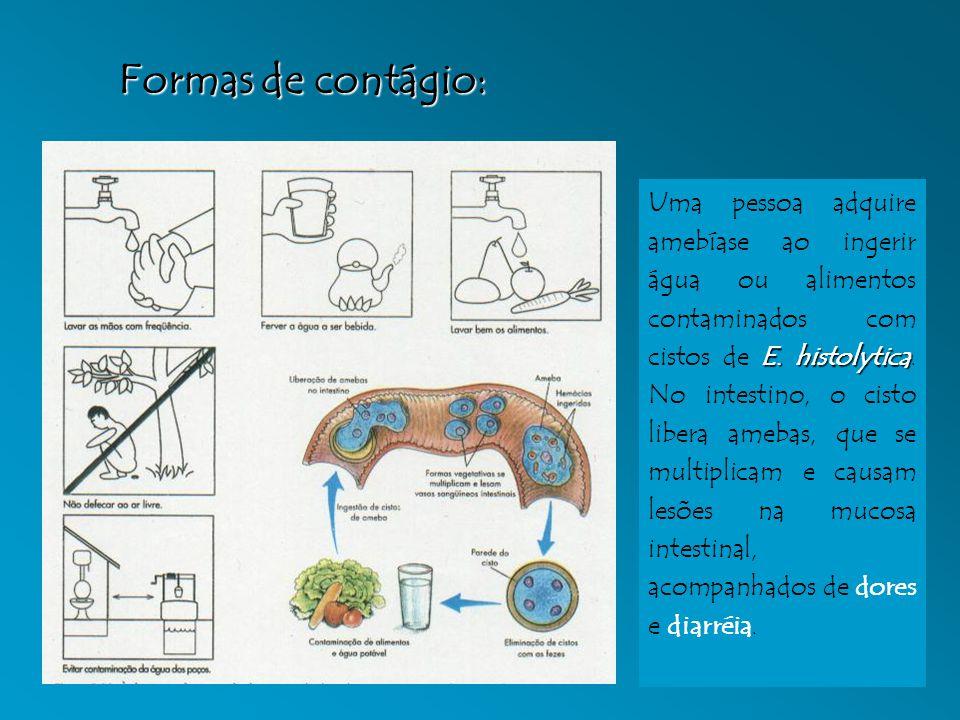 E. histolytica Uma pessoa adquire amebíase ao ingerir água ou alimentos contaminados com cistos de E. histolytica. No intestino, o cisto libera amebas