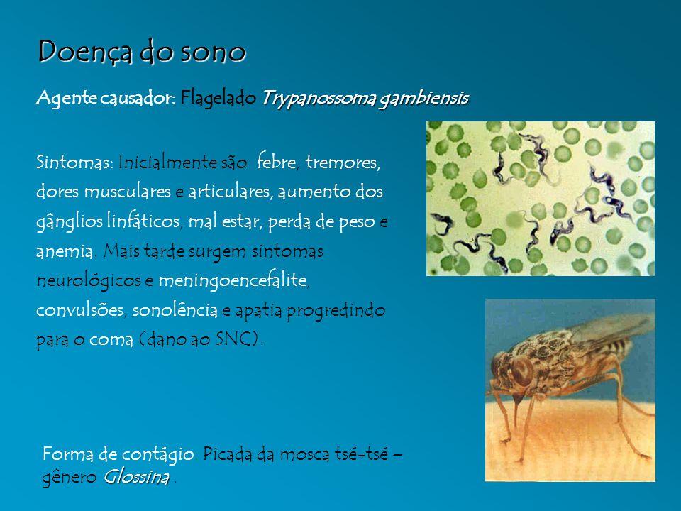 Doença do sono Trypanossoma gambiensis Agente causador: Flagelado Trypanossoma gambiensis Glossina Forma de contágio: Picada da mosca tsé-tsé – gênero