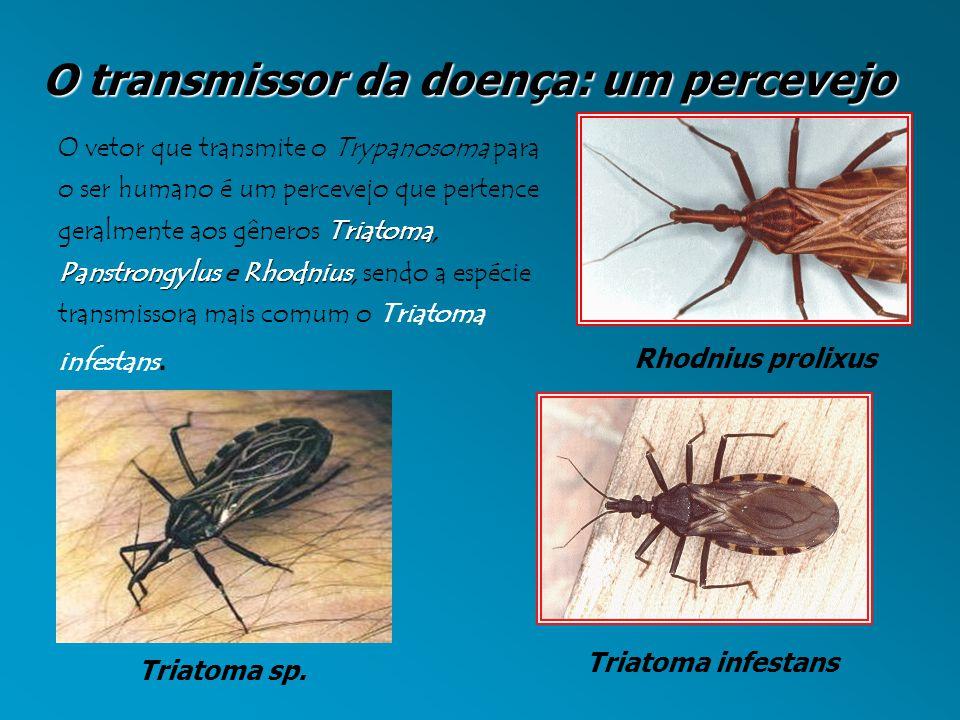 O transmissor da doença: um percevejo Triatoma PanstrongylusRhodnius O vetor que transmite o Trypanosoma para o ser humano é um percevejo que pertence