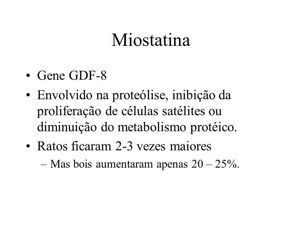 Miostatina Gene GDF-8 Envolvido na proteólise, inibição da proliferação de células satélites ou diminuição do metabolismo protéico. Ratos ficaram 2-3