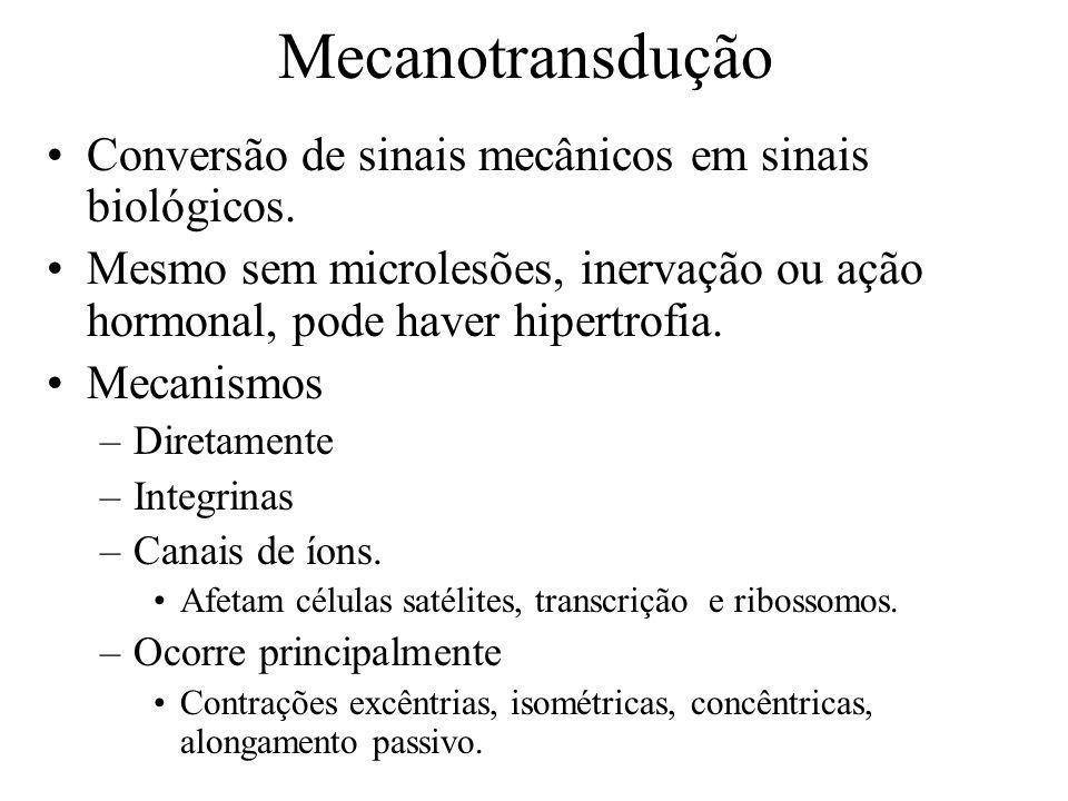 Mecanotransdução Conversão de sinais mecânicos em sinais biológicos. Mesmo sem microlesões, inervação ou ação hormonal, pode haver hipertrofia. Mecani