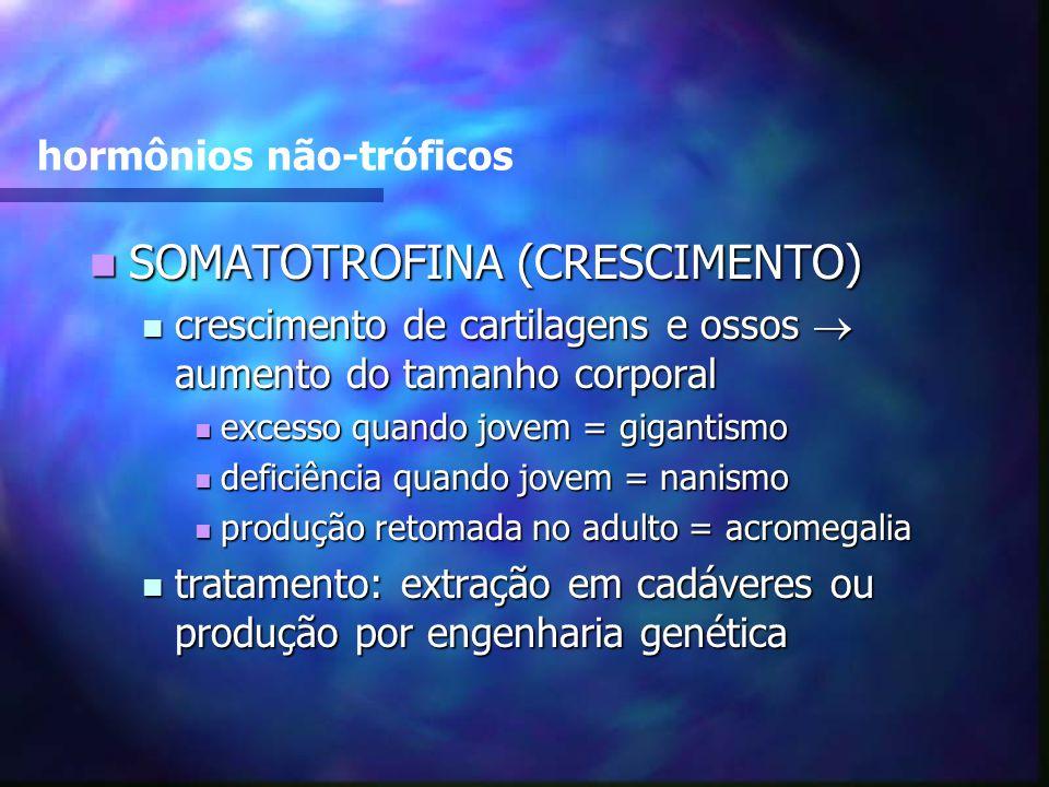 hormônios não-tróficos SOMATOTROFINA (CRESCIMENTO) SOMATOTROFINA (CRESCIMENTO) crescimento de cartilagens e ossos aumento do tamanho corporal crescime