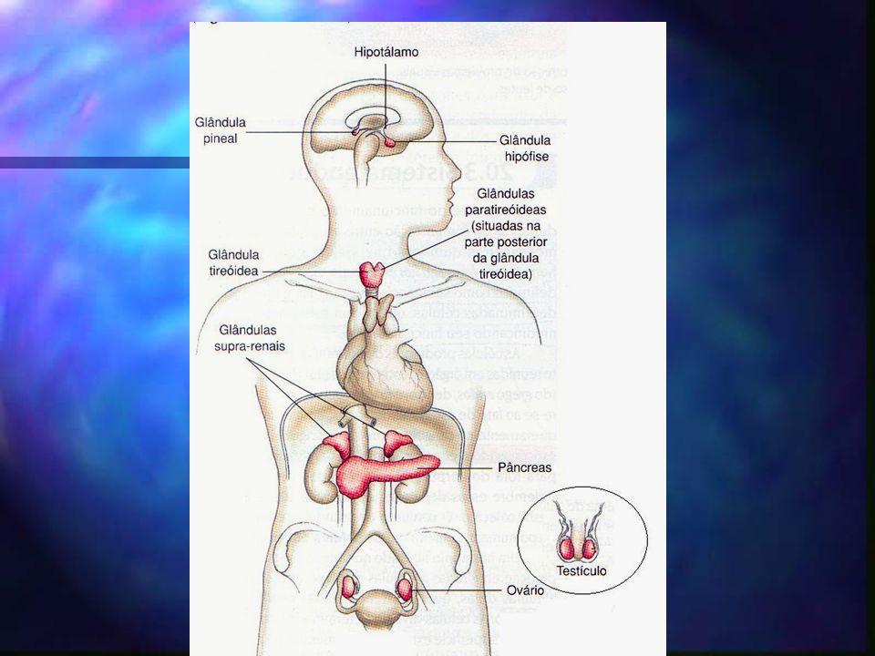 Hipotálamo papel importante na integração entre os sistemas nervoso e endócrino papel importante na integração entre os sistemas nervoso e endócrino secreta hormônios que atuam sobre a hipófise secreta hormônios que atuam sobre a hipófise 2 grupos de células 2 grupos de células hormônios armazenados na neuroipófise hormônios armazenados na neuroipófise hormônios reguladores da adenoipófise hormônios reguladores da adenoipófise