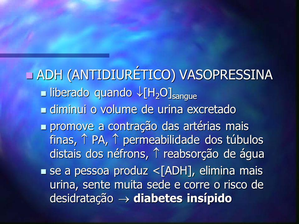 ADH (ANTIDIURÉTICO) VASOPRESSINA ADH (ANTIDIURÉTICO) VASOPRESSINA liberado quando [H 2 O] sangue liberado quando [H 2 O] sangue diminui o volume de ur