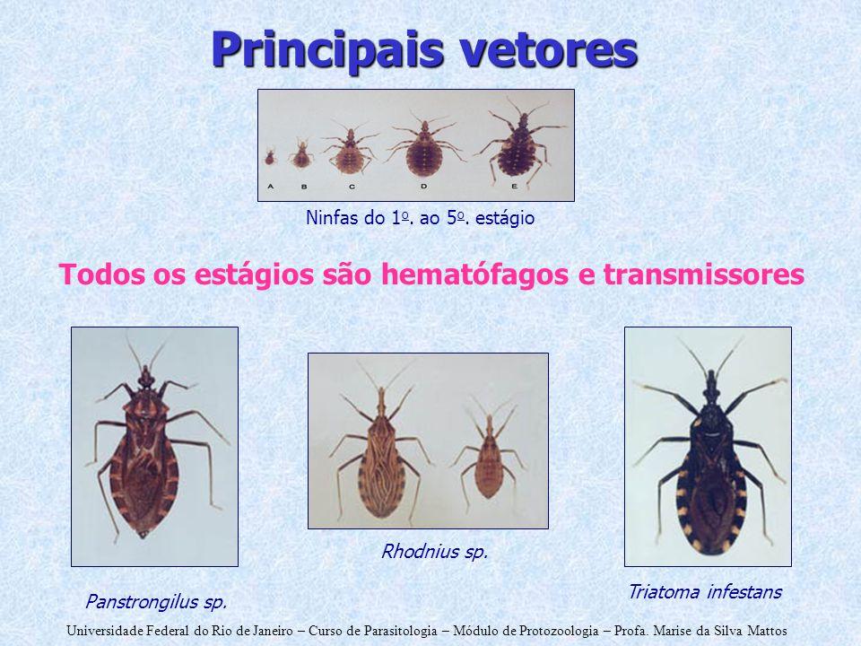 Universidade Federal do Rio de Janeiro – Curso de Parasitologia – Módulo de Protozoologia – Profa. Marise da Silva Mattos Todos os estágios são hemató