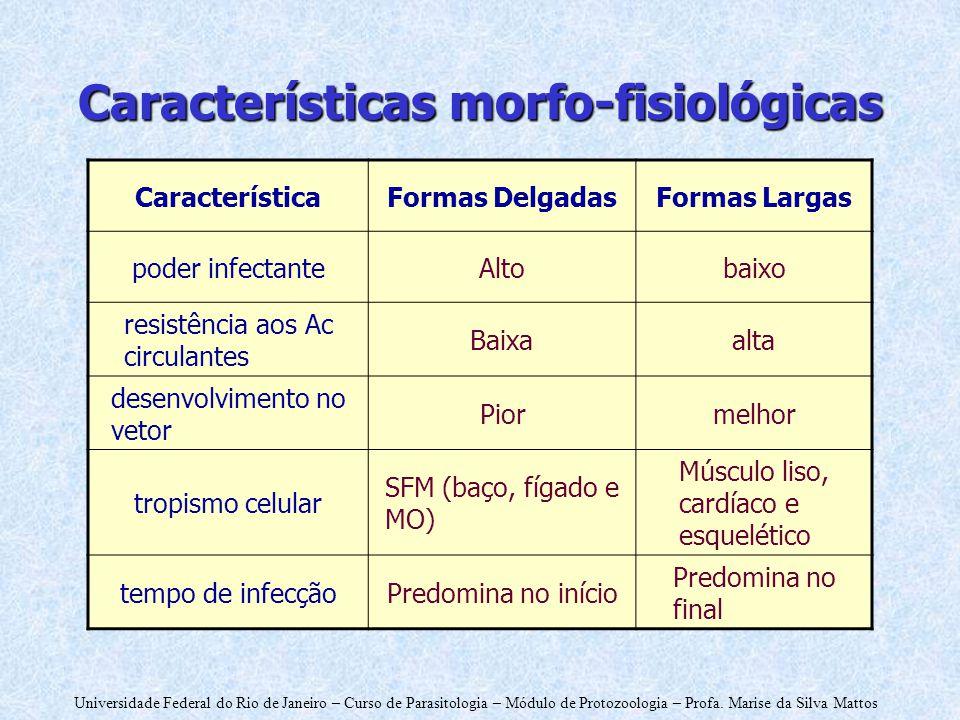 Universidade Federal do Rio de Janeiro – Curso de Parasitologia – Módulo de Protozoologia – Profa. Marise da Silva Mattos CaracterísticaFormas Delgada