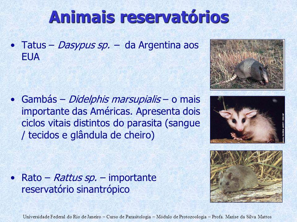 Universidade Federal do Rio de Janeiro – Curso de Parasitologia – Módulo de Protozoologia – Profa. Marise da Silva Mattos Animais reservatórios Tatus