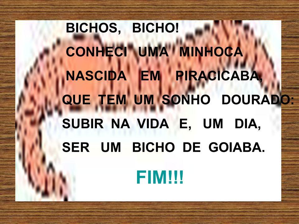 BICHOS, BICHO.