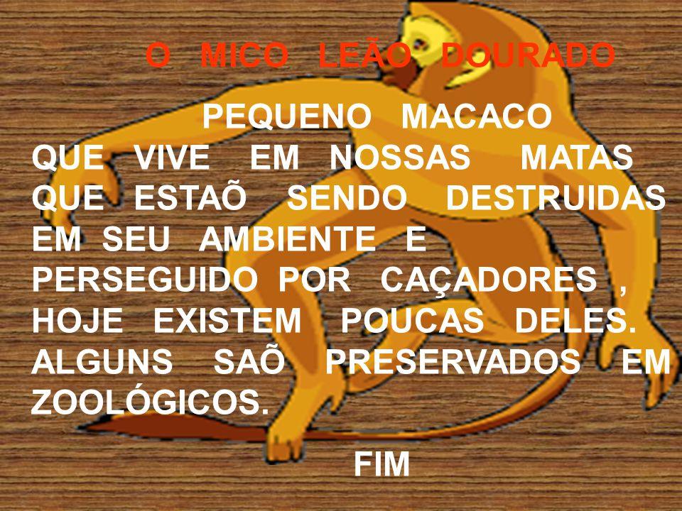 O MICO LEÃO DOURADO PEQUENO MACACO QUE VIVE EM NOSSAS MATAS QUE ESTAÕ SENDO DESTRUIDAS EM SEU AMBIENTE E PERSEGUIDO POR CAÇADORES, HOJE EXISTEM POUCAS DELES.