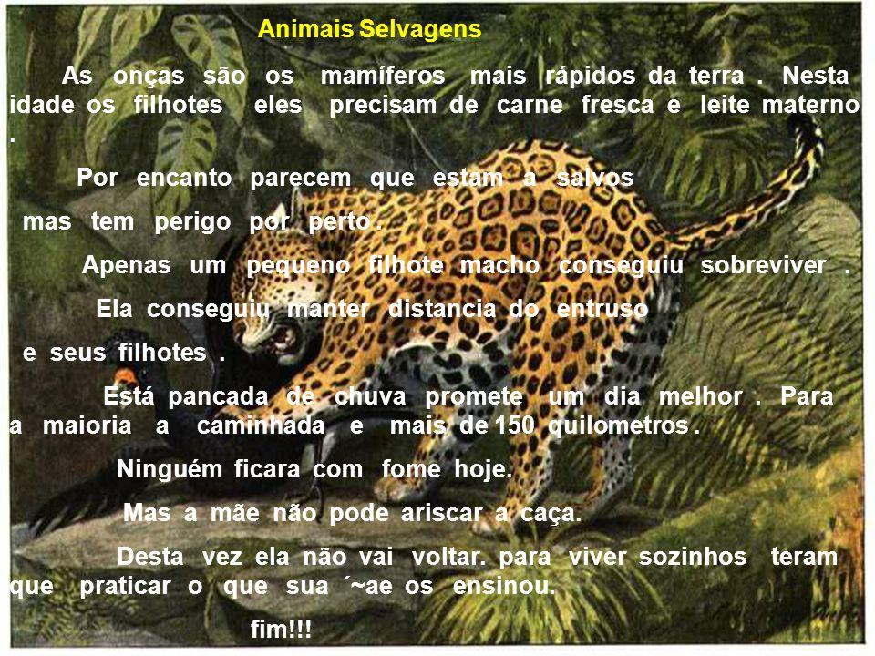 Animais Selvagens As onças são os mamíferos mais rápidos da terra. Nesta idade os filhotes eles precisam de carne fresca e leite materno. Por encanto