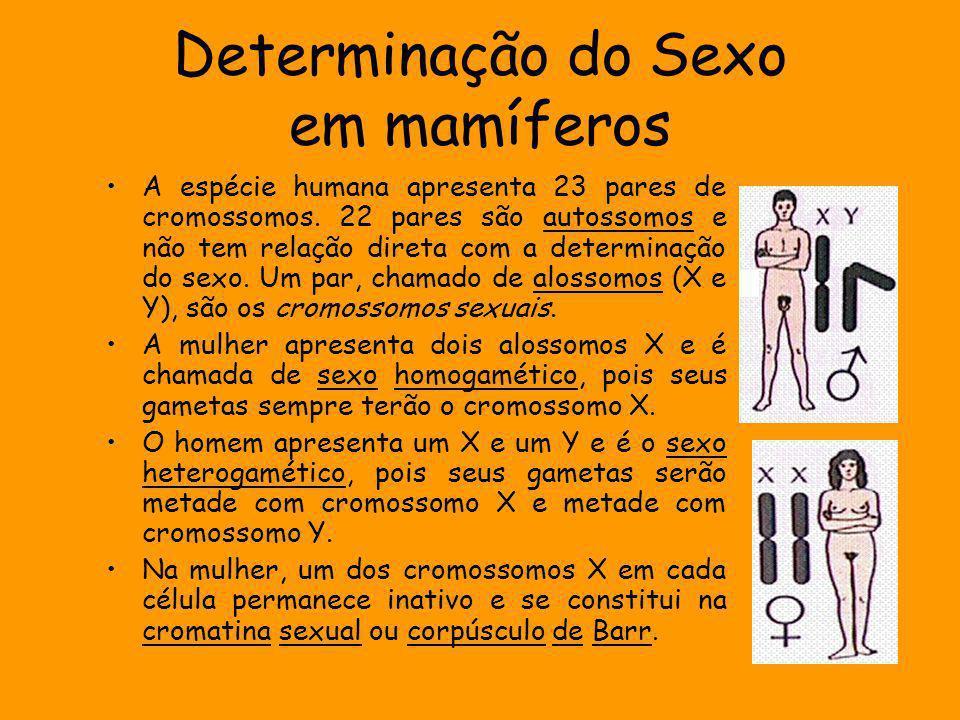 Em mamíferos, a definição primária do sexo é a determinação das gônadas.